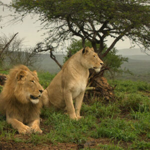 2-Day Kruger Budget Safari