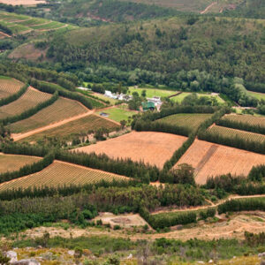 Cape Winelands Full Day