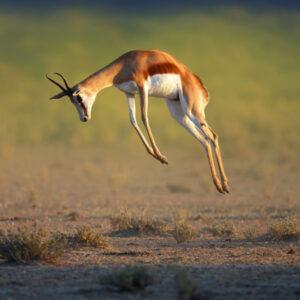 Pilanesberg Special Safari Tour