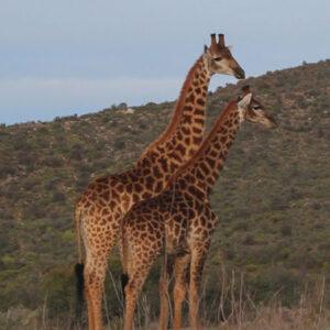 4 Day Tented Safari