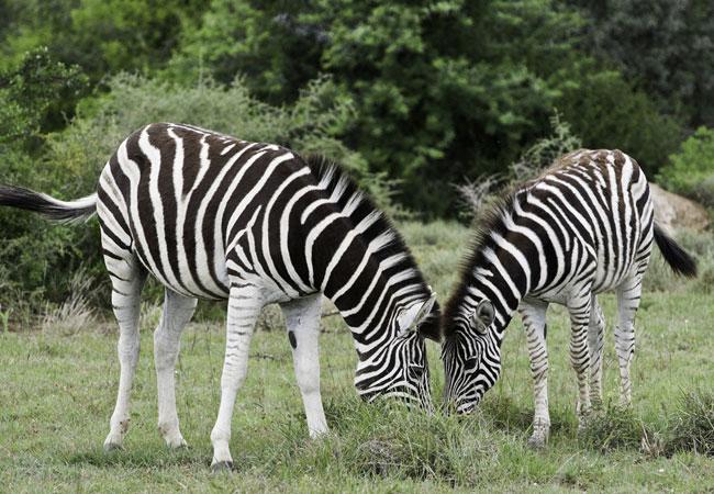 4 Day Madikwe Buffalo Ridge Safari
