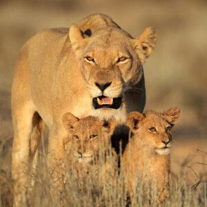 3-Day Jaci's Lodge Safari