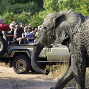 3-Day Kapama Lodge Safari