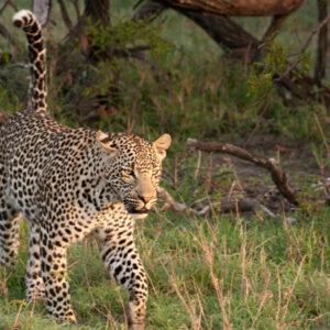 Pilanesberg Deluxe Safari Tour