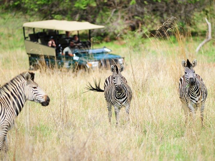 4-Day Kruger Treehouse Safari
